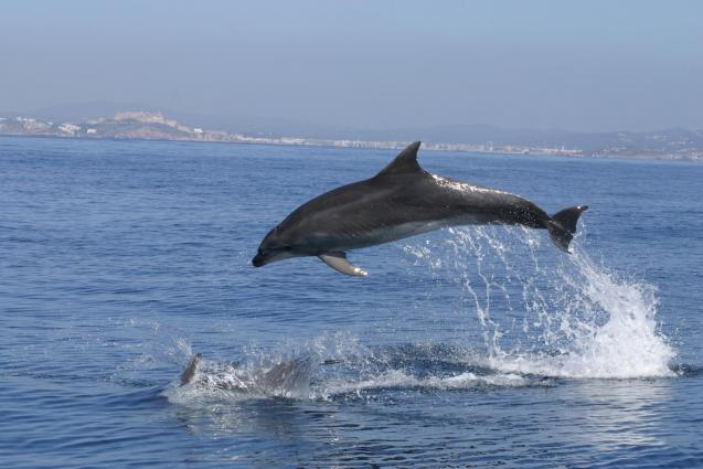 Dolphins in Palma!
